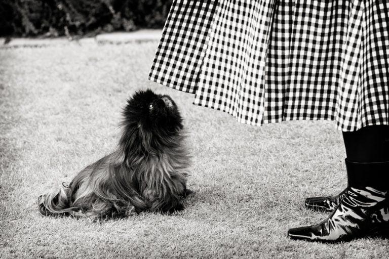 small black dog looking up at wedding