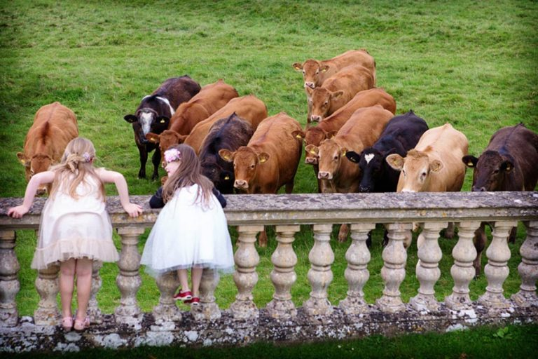two girls learning over wall with herd of cows watching at Stoke Rochford Hall
